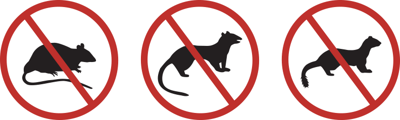 No rats, stoats or weasels